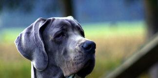 Mokra karma dla psa czy sucha? Jaki rodzaj karmy dla psa